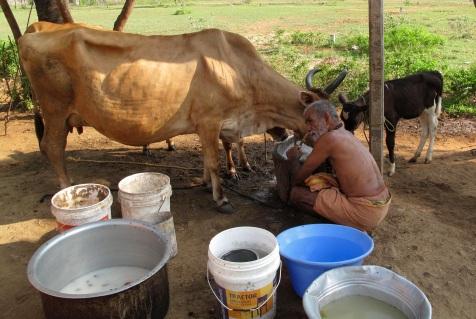 milking for Update:kaliyuga 2015